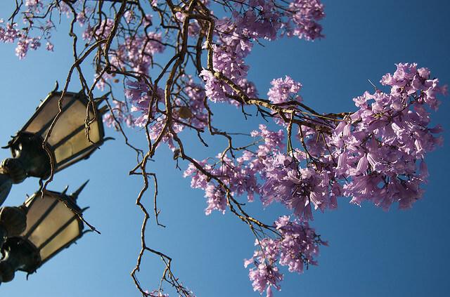 primavera Temperatura em Buenos Aires: 5 a 11 de outubro