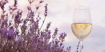 vinhos-argentinos-primavera2