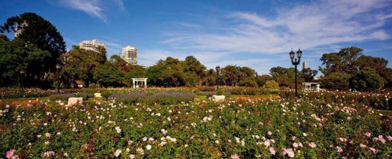 Roseiral_de_Buenos_Aires_Gov_05 (1)